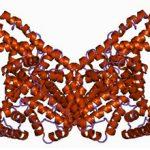 Альбуминурия: что это такое, причины, диагностика и лечение