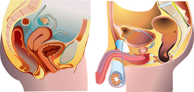 Рак уретры у мужчин и женщин