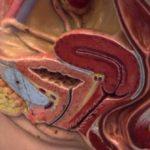 Мочеполовая система женщины: строение и возможные инфекции