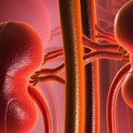 Кровоснабжение почек — как оно осуществляется